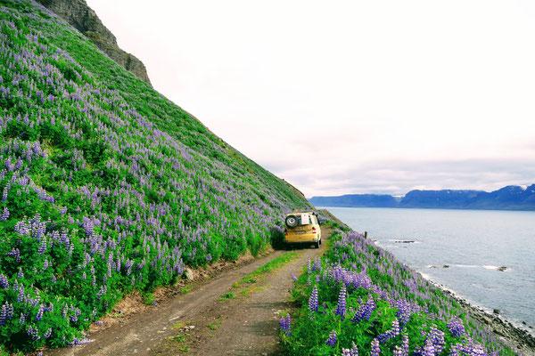 Vorbei an wunderschönen aber steilen Küsten mit Lupinen