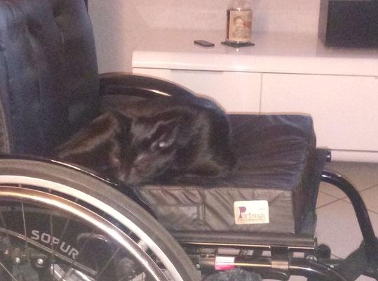 Bobby, hier noch im alten Rollstuhl