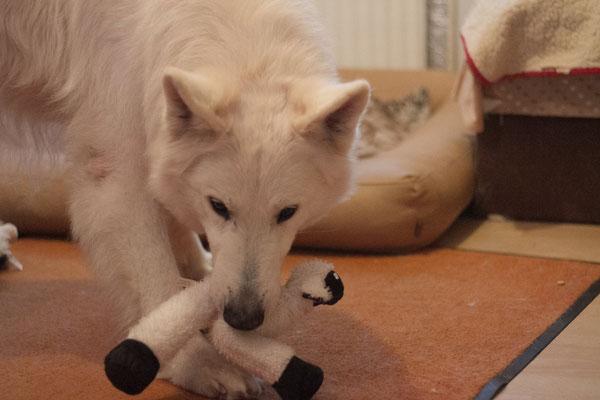 Darki... auch mal um das Spielzeug kümmern :D