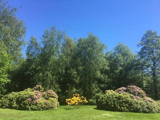 Aussicht: blaue Himmel, grüne Wiese
