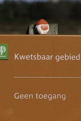 Staatsbosbeheer © fotograafminou.nl