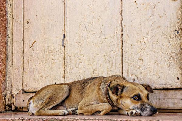 Hond in Trinidad, Cuba