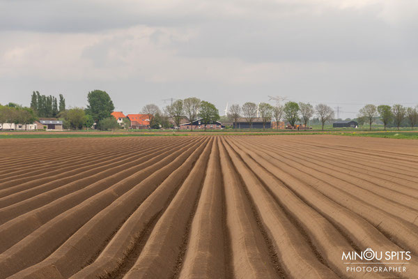 Aspergeveld in Brabant