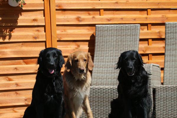 Donna, Alva und Merle