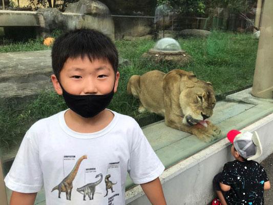 ライオンの食事の時でした 隣の子が次に食べられそうです