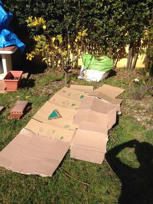 Coprire il terreno con il prato esistente con del cartone