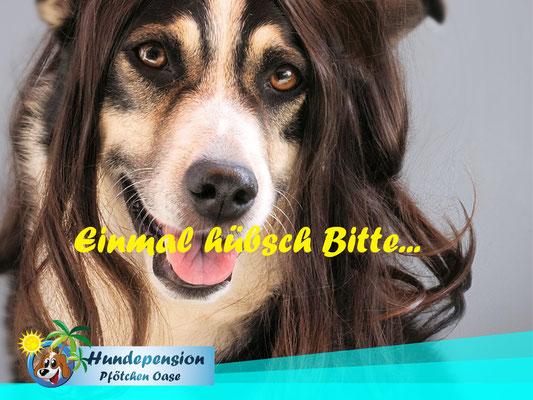 Hundefrisör - Einmal hübsch