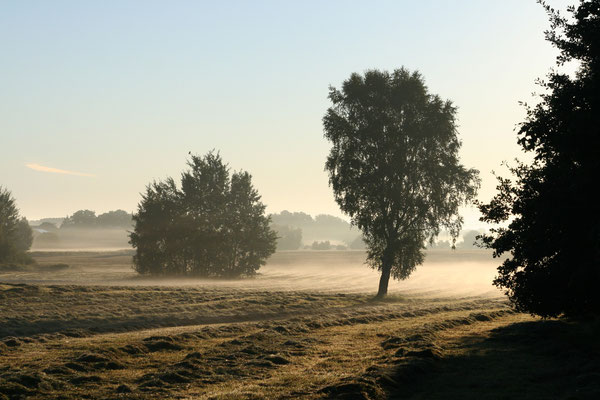 Altmärkische Landschaft bei Diesdorf
