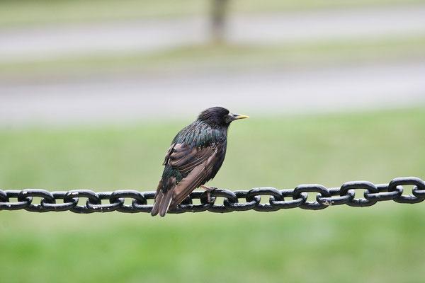 Washington DC - Bird