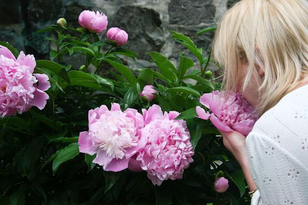 Quebec City - Flowers