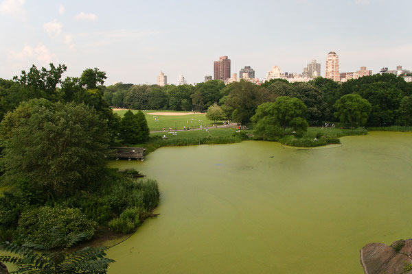 New York City - Central Park