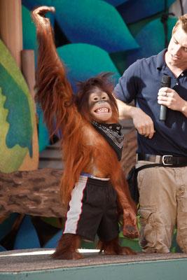 Universal Studios - Movie Animal Show