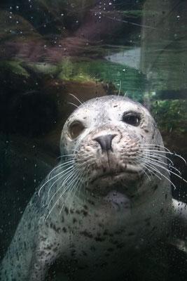 Boston - Aquarium