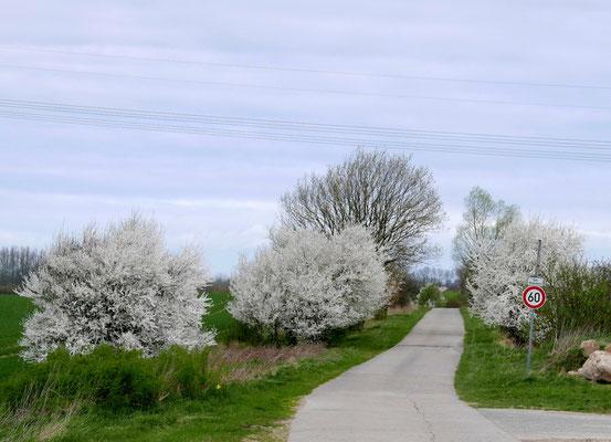 Frühling am Wegesrand
