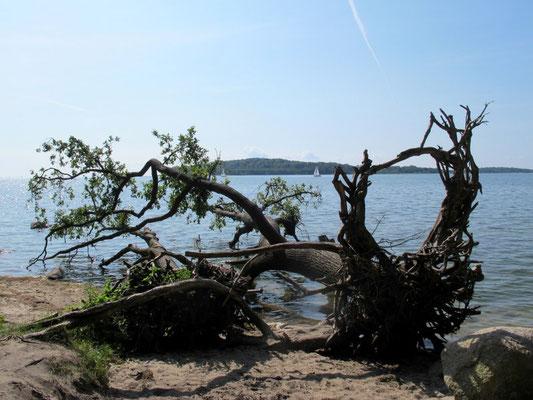 Blick auf die Insel Vilm