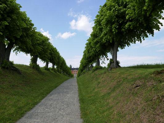 Festonallee zum Schloss Bothmer