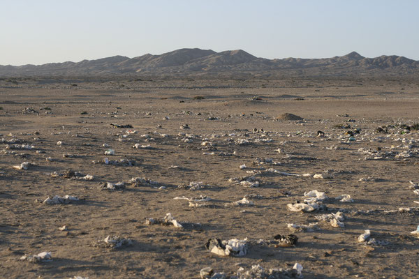 Der Müll reichte so weit das Auge in die peruanische Wüste reichte.