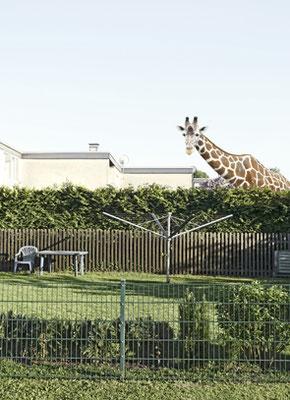Giraffe, Dortmund