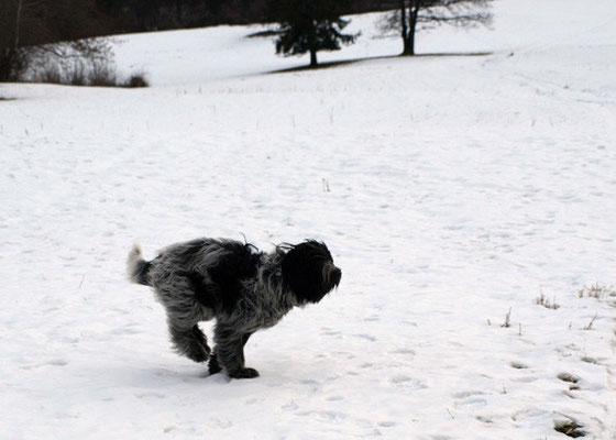 Schnee ist super . . .