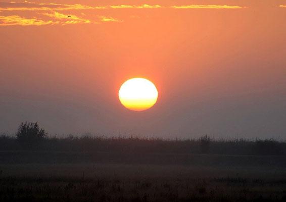 Sonnenaufgang in der Puszta (c) Christa Brunner
