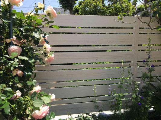 木調のホワイトのフェンスとバラ