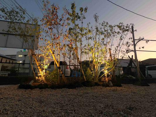雑木のライティング