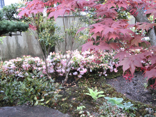 既存の資材を最大限利用した彩り豊かな癒し和庭
