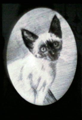 Dierenportret kitten: Zwart contékrijt en tekenpotlood op wit papier (2008)