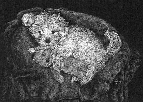 Dierenportret maltezerpup: Wit potlood op zwart papier (2014)
