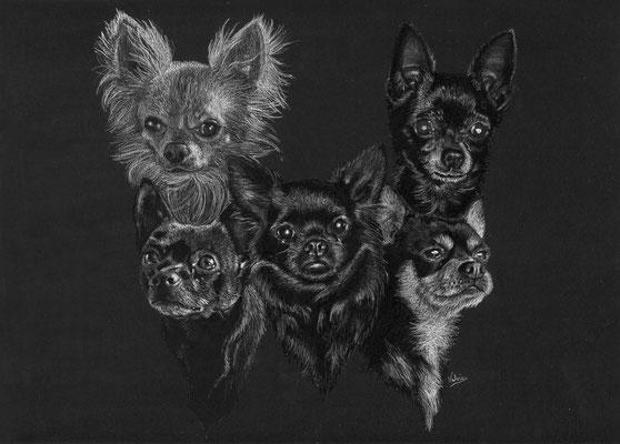Dierenportret chihuahua familie: Wit potlood en houtskool op zwart papier (2017)
