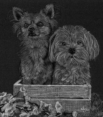 Dierenportret chihuahua & maltezer in bakje: Wit potlood en houtskool op zwart papier (2016)