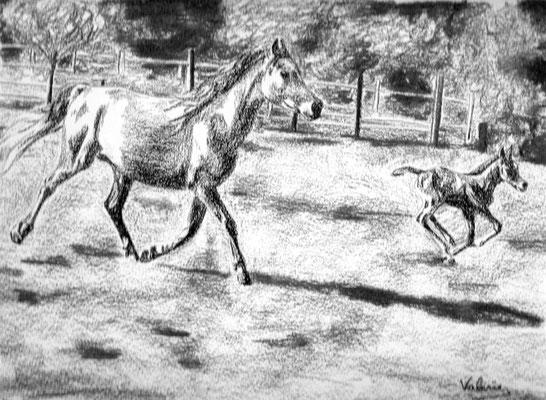 Dierenportret merrie met veulen: Zwart contékrijt en houtskool op wit papier (2011)