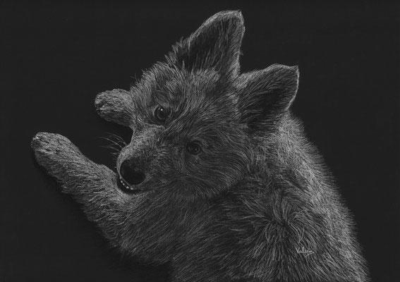 Dierenportret zwitserse witte herder puppy: Wit potlood en houtskool op zwart papier (2019)