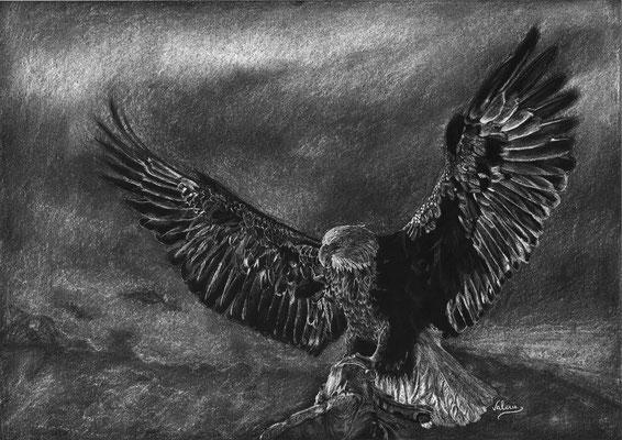 Dierenportret arend: Wit potlood op zwart papier (2015)