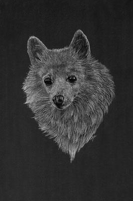 Dierenportret kleine kees: Wit potlood en houtskool op zwart papier (2019)