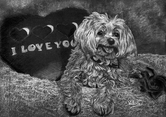 Dierenportret maltezer met hartje: Wit potlood en houtskool op zwart papier (2015)