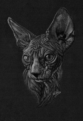 Dierenportret sfinx kitten: Wit potlood op zwart papier (2021)