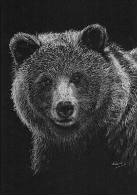 Dierenportret beer: Wit potlood op zwart papier (2014)