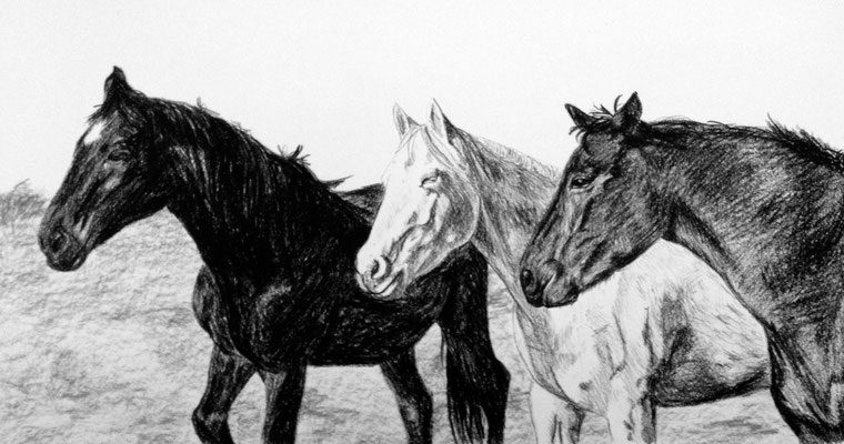Dierenportret paarden: Zwart contékrijt en houtskool op wit papier (2013)