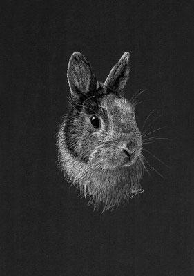Dierenportret konijn: Wit potlood op zwart papier (2021)