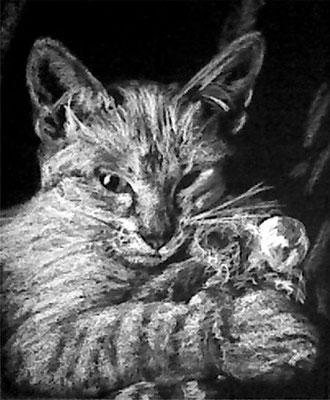 Dierenportret siamese kattin: Wit contékrijt op zwart papier (2009)