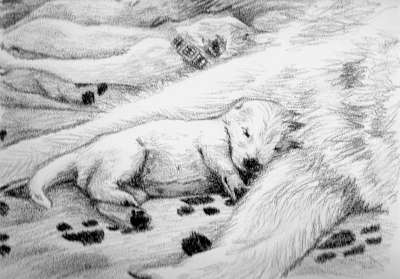 Dierenportret zwitserse witte herder pups: Zwart contékrijt en tekenpotlood op wit papier (2011)