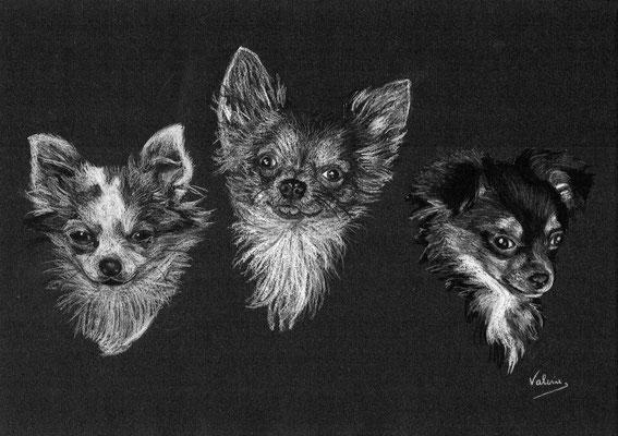 Dierenportret chihuahua's: Wit potlood en houtskool op zwart papier (2014)