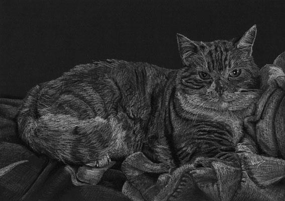 Dierenportret kat op dekentje: Wit potlood op zwart papier (2018)