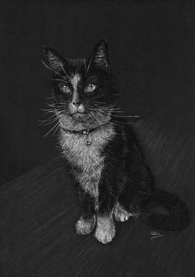 Dierenportret zwart-witte kat: Wit pastelpotlood en houtskool op zwart papier (2017)