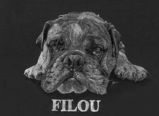 Dierenportret bulldog Filou: Wit potlood op zwart papier (2017)