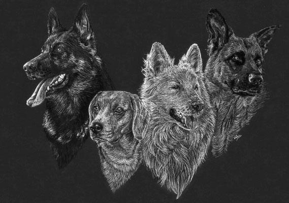 Dierenportret 3 herders en een beagle: Wit potlood en houtskool op zwart papier (2018)