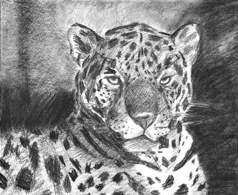 Dierenportret luipaard: Zwart contékrijt en tekenpotlood op wit papier (2007)