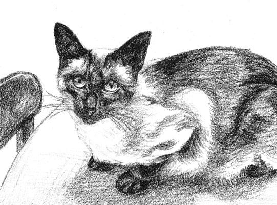 Dierenportret siamese kater: Zwart contékrijt en tekenpotlood op wit papier (2009)