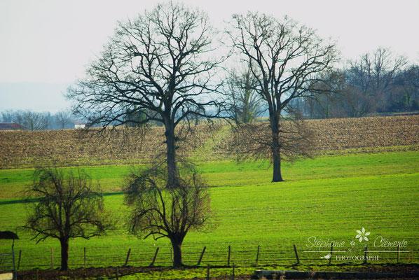 nature et paysage du Gers